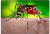 Online Case-Based Lesson: Dengue Fever