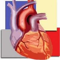 Cardiac CTA Course Level 1 : Beginner (Mar, 2017)