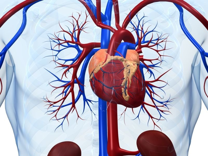 Heart CTA Results in Lower Death Rate From CHD, Non-Fatal MI