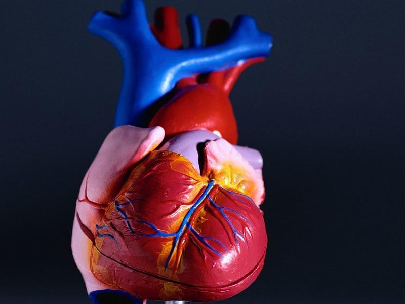 Algorithm Can Discriminate Cardiovascular Disease Risk