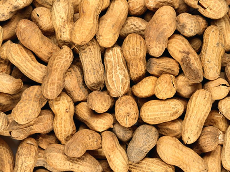 Peanut Patch Found Safe, Effective for Treating Allergies