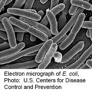 <i>E. Coli</i> Found in Water at Tennessee Ziplining Facility