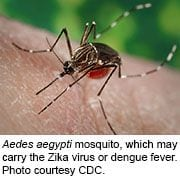 Interim Guidance Provided for Men With Possible Zika Infection