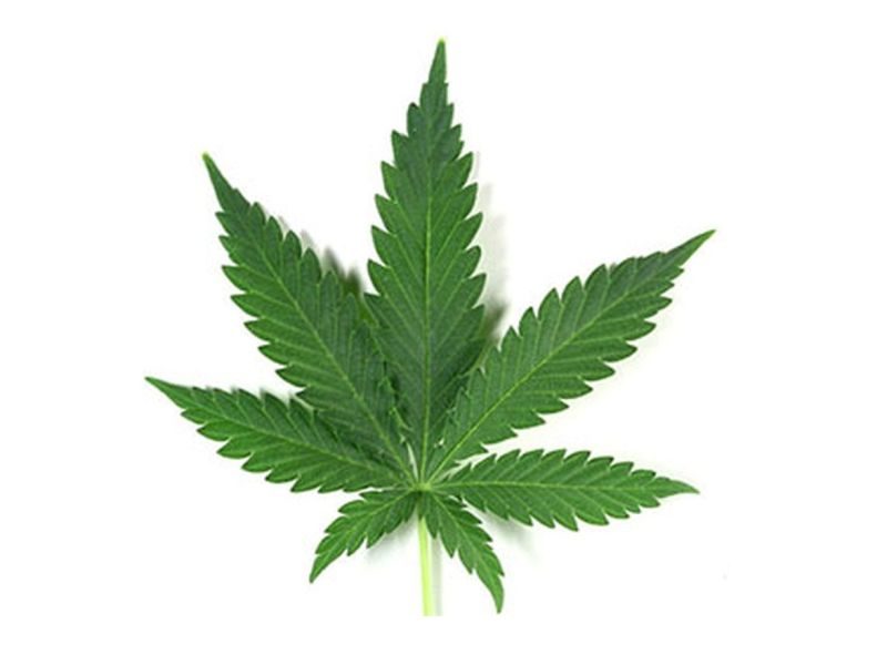 Legal Cannabis Use Common Among Cancer Patients