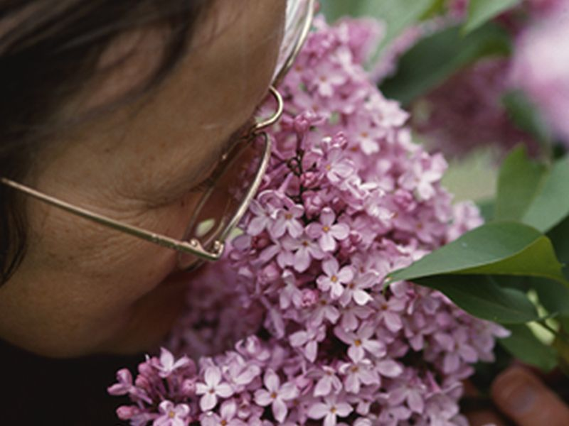 Smell Loss Predicts Mortality Irrespective of Dementia