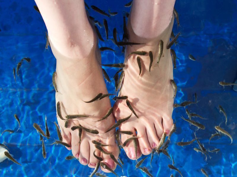 Fish Pedicure Causes Woman to Lose Toenails