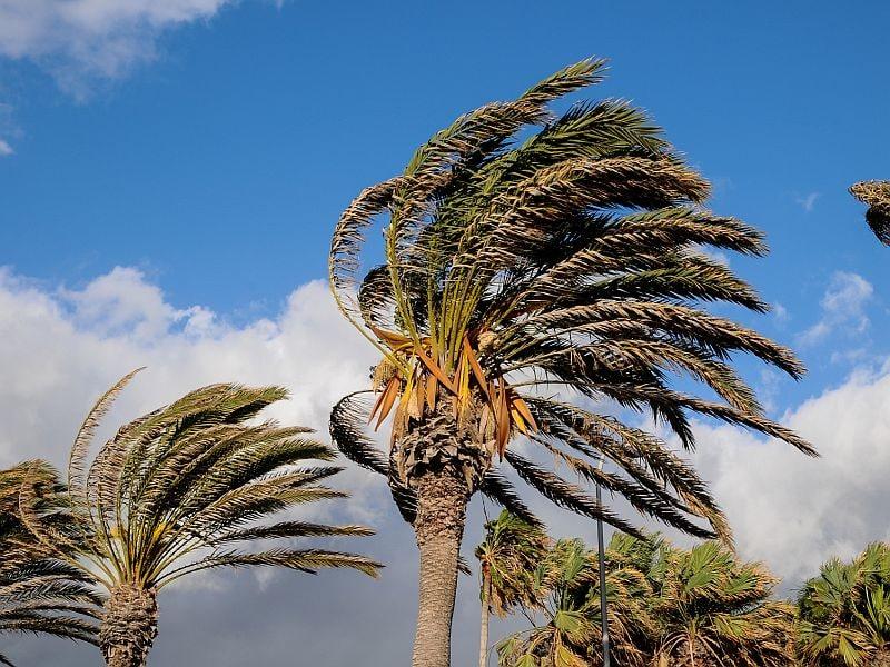 Death Records Estimate 1,139 Deaths Due to Hurricane Maria