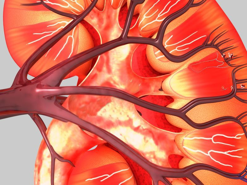 HCV-Infected Kidney Transplant More Efficient in HCV-Infected
